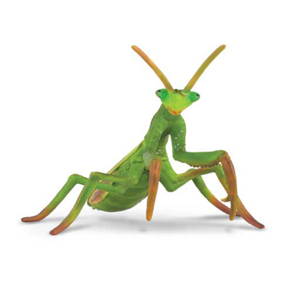 praying mantis essay Praying mantis termite wasp super teacher worksheets - wwwsuperteacherworksheetscom my insect report name: 1 (write the name of your insect on this line) color the insect pictures on the cover super teacher worksheets - wwwsuperteacherworksheetscom.