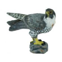 falcon
