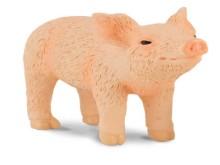 Piglet with head raised