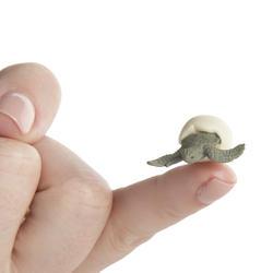 miniature_sea_turtle_hatchling_medium (1)