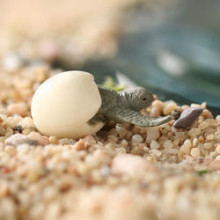 miniature_sea_turtle_hatchling_medium