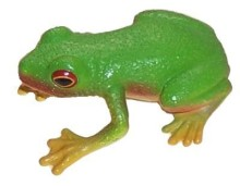 Red_Eyed_Green_Tree_Frog__04540__55239.1487848559
