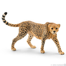 Female Cheetah 2016