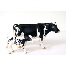 bw cow and calf