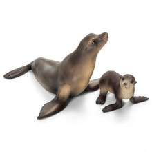 sea lion family